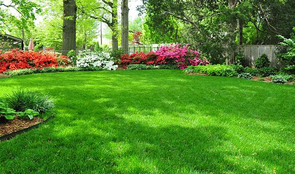 Как ухаживать за газоном весной: теория и практика