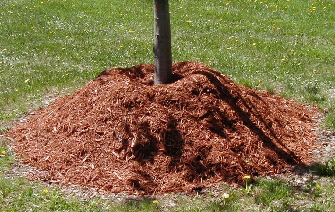 защита растений от жары