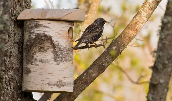 На птичьих правах: необычные и креативные скворечники для птиц