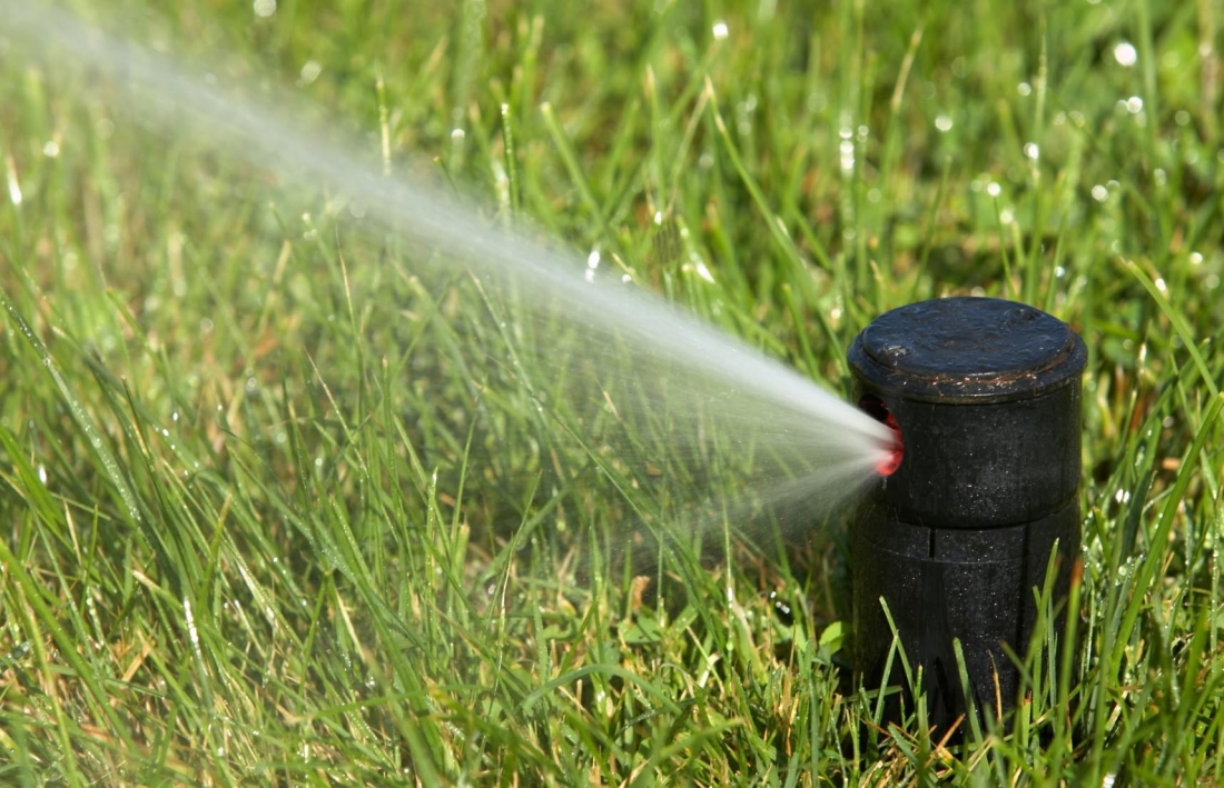Защищаем растения от жары