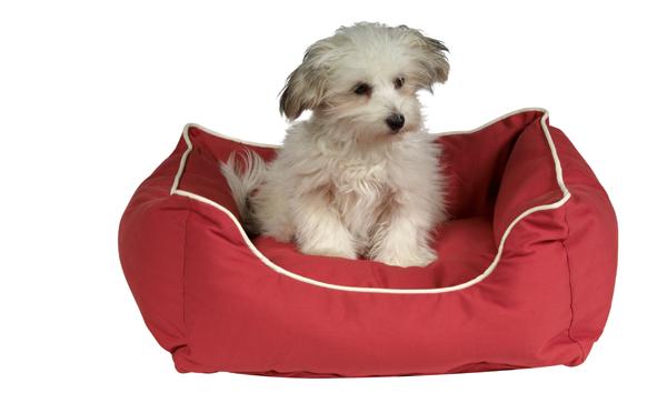 Кровати для домашних любимцев – оригинальные модели