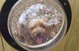 Пластиковые окна для собак PetPeek