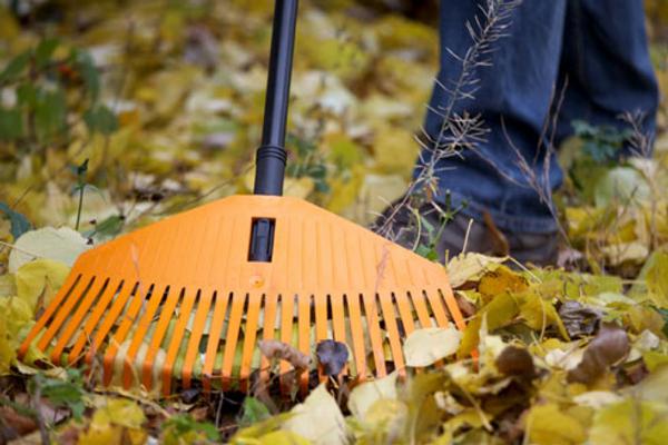 Осенние работы в саду: последовательность и техника выполнения