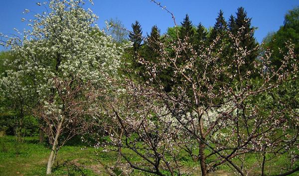 Что нужно сделать в саду весной