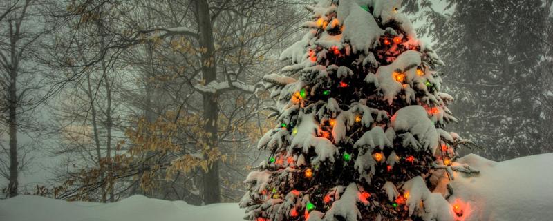 деревья в новый год