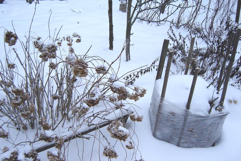 подвязка деревьев зимой