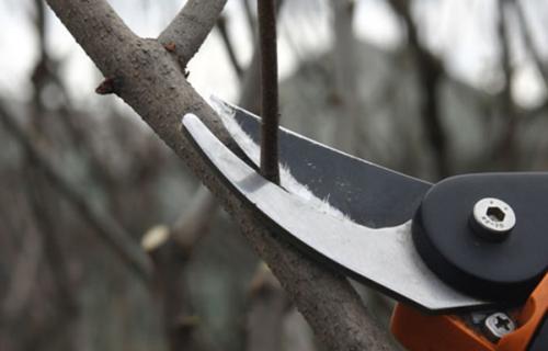 деревья в саду: обрезка и лечение ран