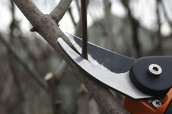 Деревья в саду: обрезка и лечение ран у деревьев